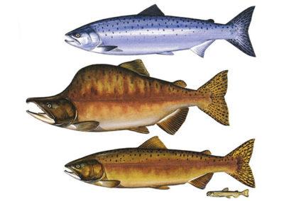 Fish example